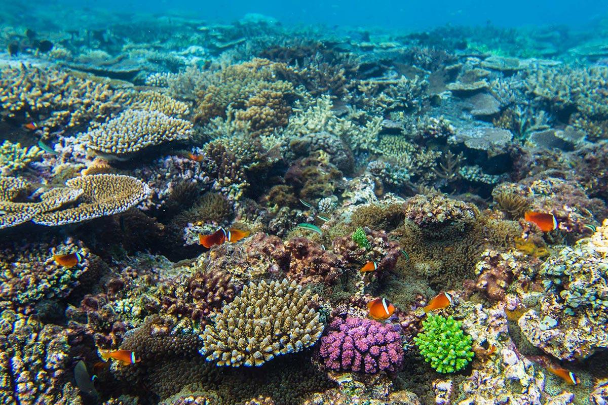 Fiji-Travel-Network-Kokomo4