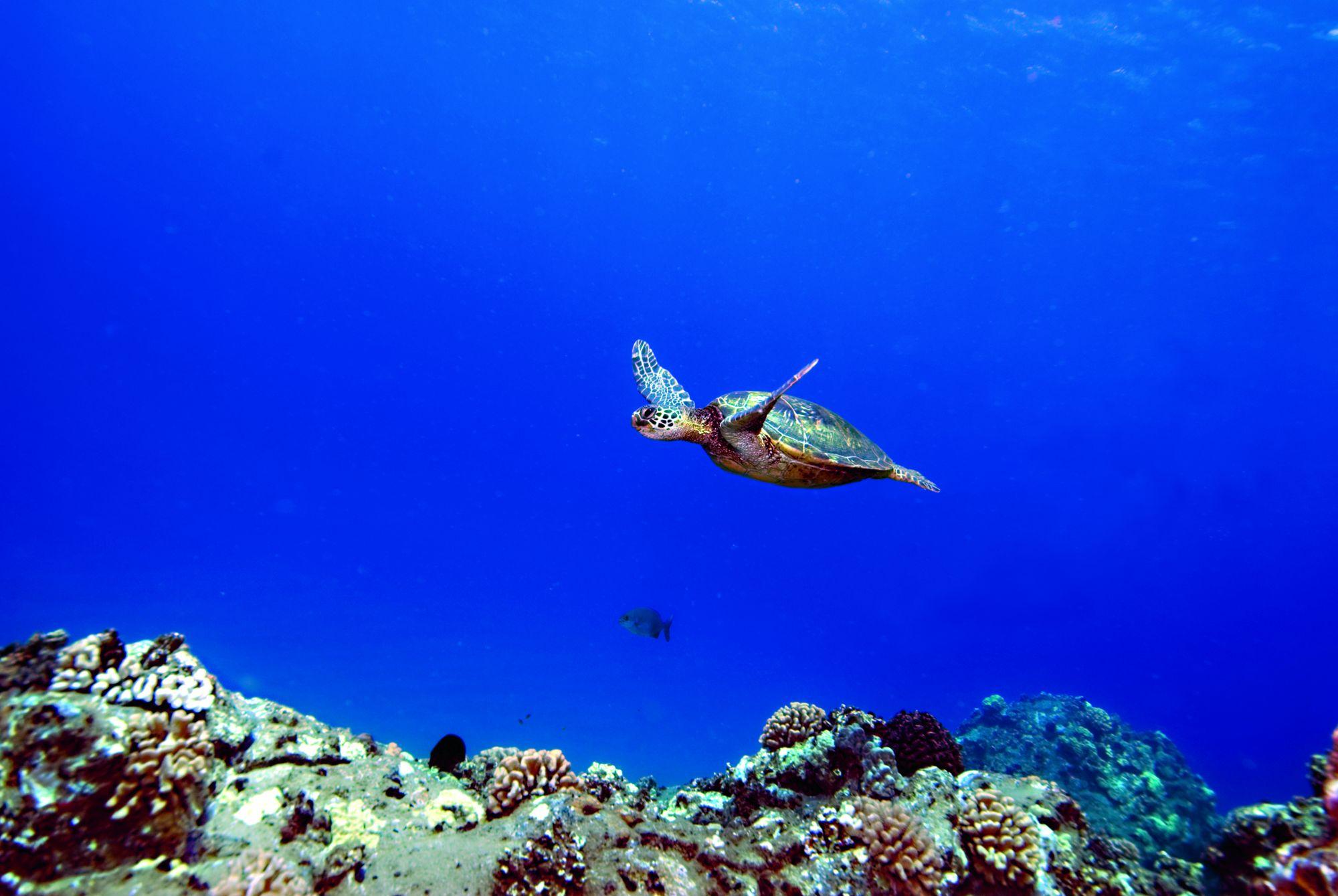 Fiji-Travel-Network-Ritz-Carlton-Kapalua-8